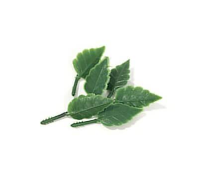 עלה-ירוק-1